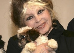 NICE : Brigitte Bardot campaigns against puppy smuggling